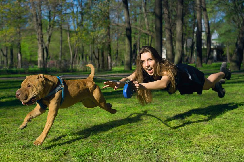 Mensch fliegt hinter Hund her