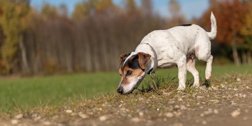 Hund auf der Fährte