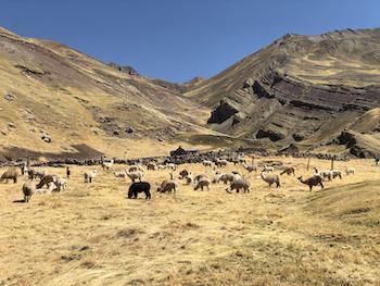 Magisches Peru Hochanden Tag 4
